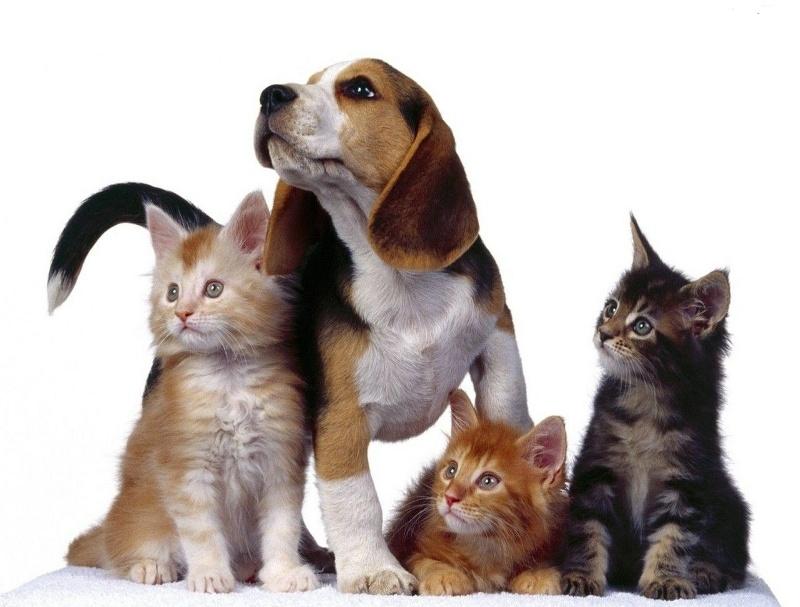 Fumo : Fda, rischi da passivo anche per cani e gatti
